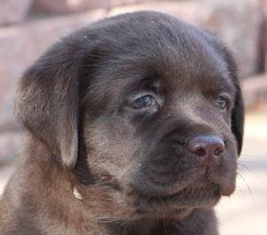 18 Jul Oakley's Puppies_82_resize_edited