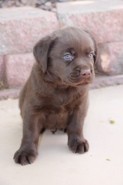 Little Chocolate Chunk reserved today...