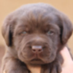 19 Feb Puppies 16_Feb_0317_resize_edited