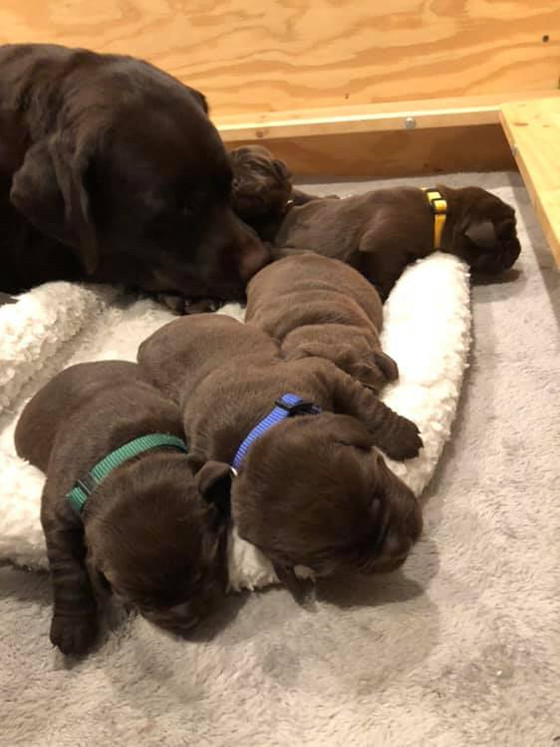 Perfect Puppy Pile!!