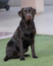 15 May Dog Pics_0015_resize.JPG