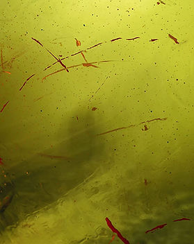 green-abstract-paint-resized.jpg