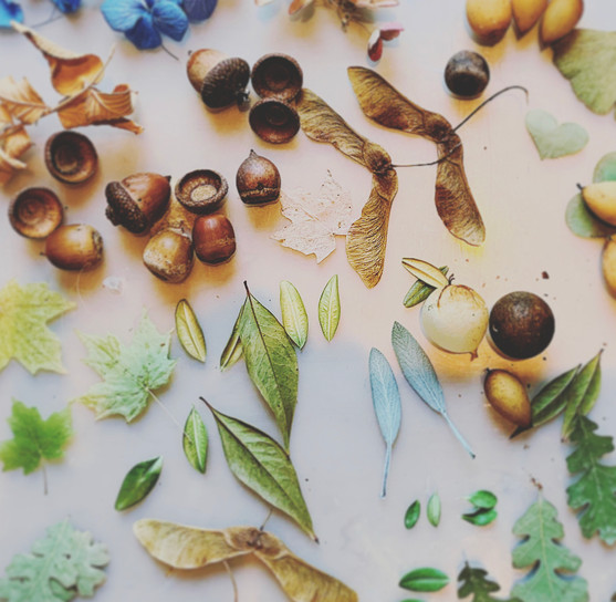Dried Flowers, Leaves and Seeds