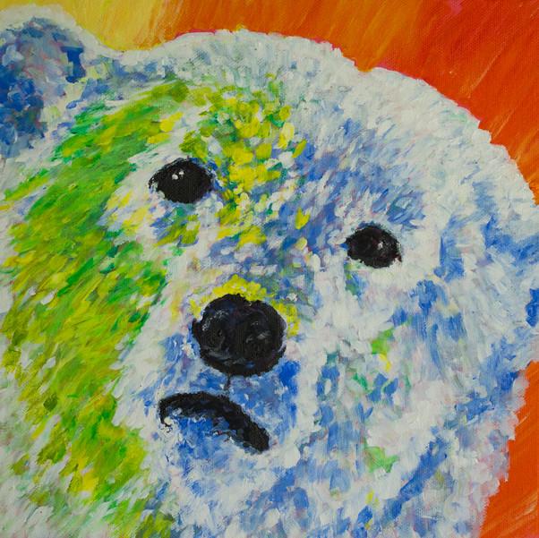 Polar Bear Talks