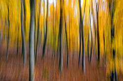 Yellow Forest 1