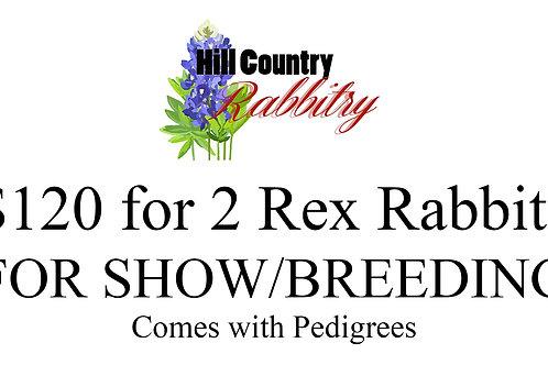 Purchase 2 x Rex Rabbit SHOW/BREEDING