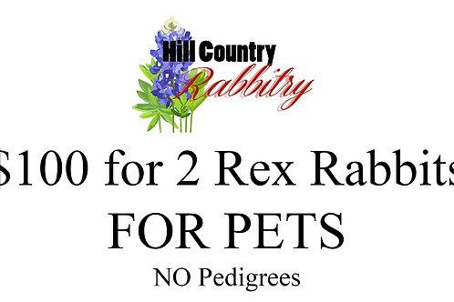 Purchaseof 2 x Rex Rabbits PET