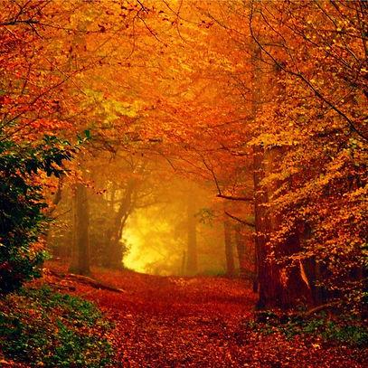 Fall sale image2.jpeg