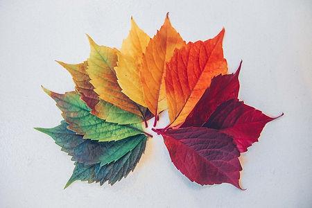 inner seasons leaves.jpg