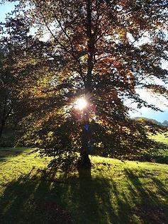 tree with light.jpg
