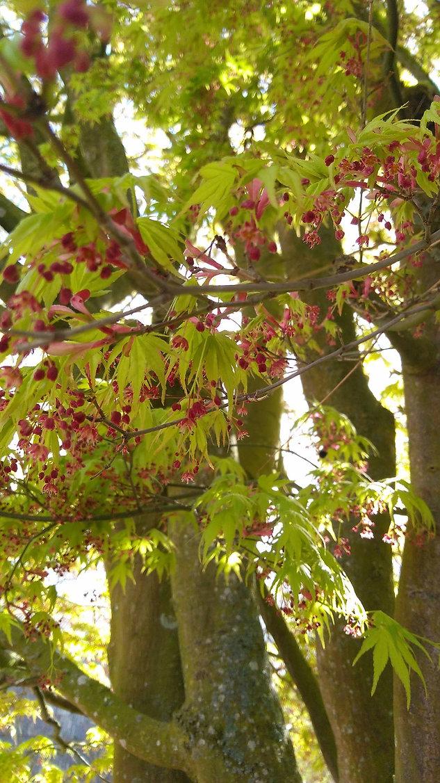 special tree 2.jpg