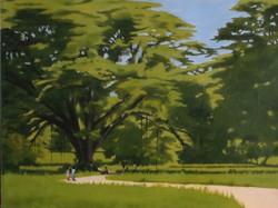 Guango Trees, YS, Jamaica