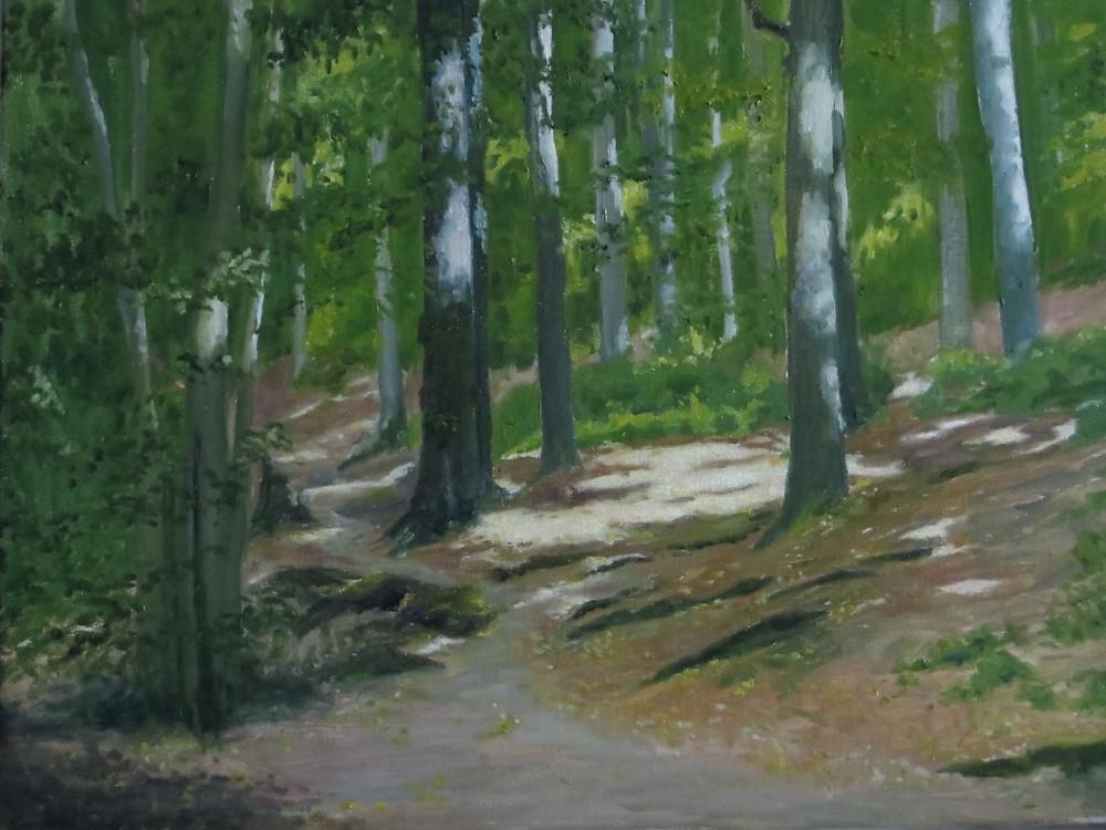 Beech Wood, 46 x 61cm, oil on canvas, 2015