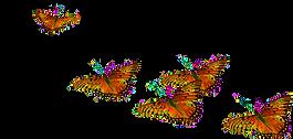 butterflies2_edited_edited.png