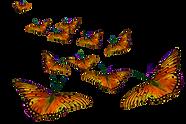 butterflies2_edited.png