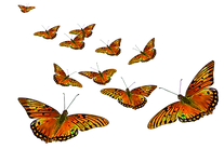 butterflies2_edited.png