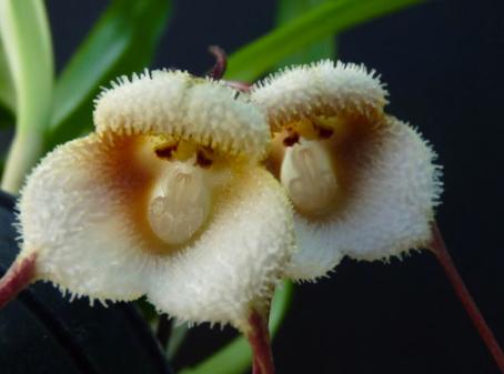 Animal-Looking Flowers