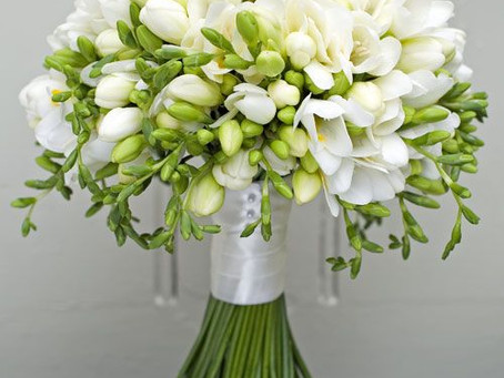 Flower of the Month - The Freesia