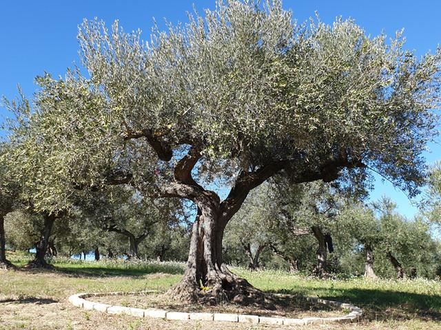 albero_sacro-1.jpg