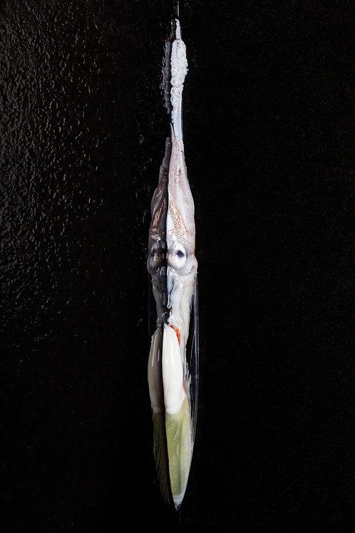 Le Calamar (80x120)