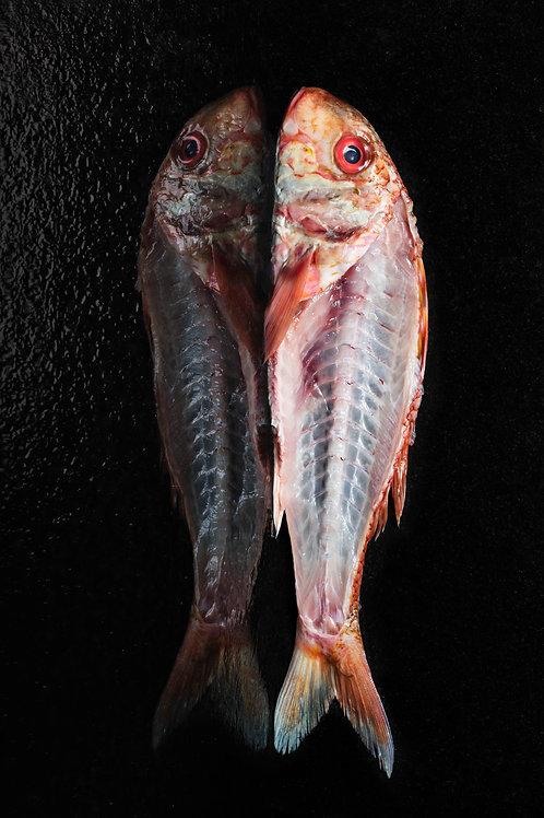 Le Rouget Barbet (40x60cm)