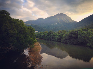 TungChung_mangrove.JPG