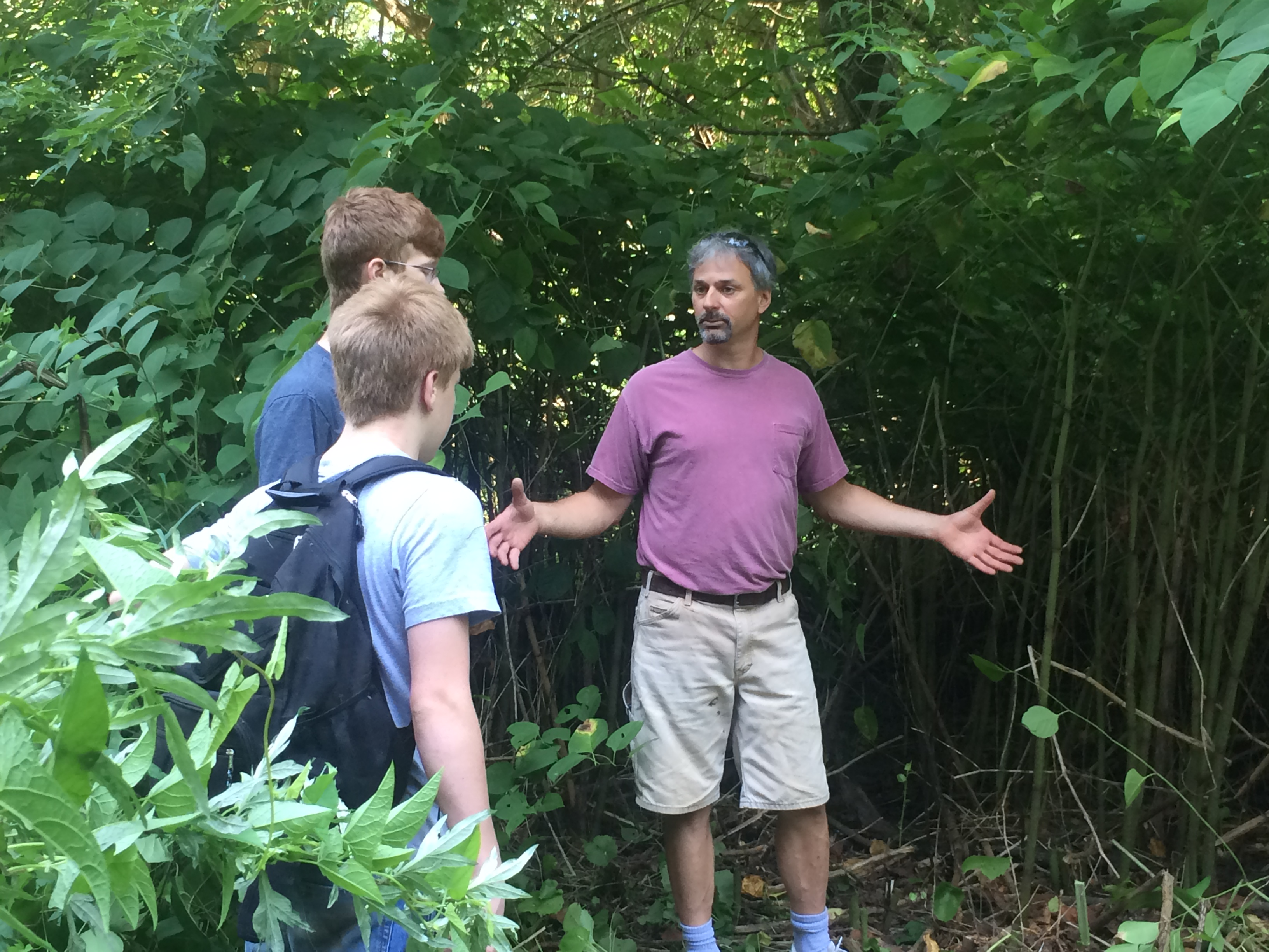 7-21-2016_Joe explains about Japanese Knotweed_8