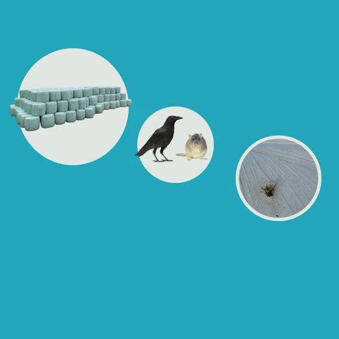 Kompleksowa ochrona przed gryzoniami i ptakami