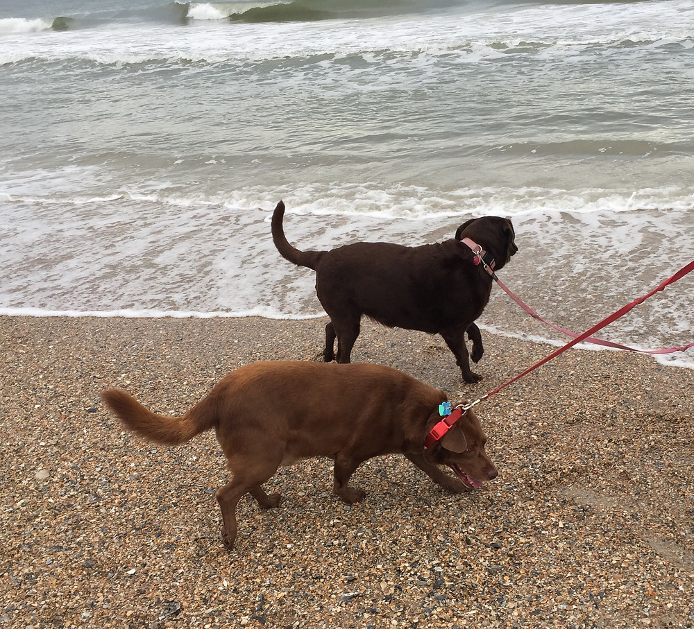 two dogs on the beach with ocean waves