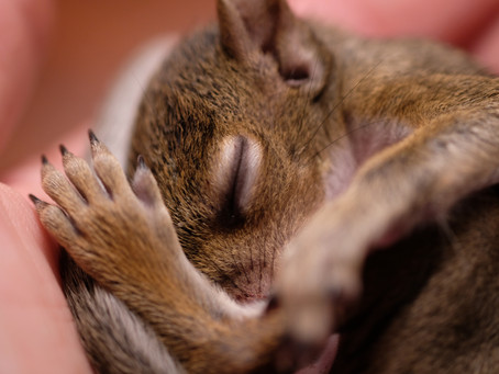 Making a Difference - The Squirrel Sisters