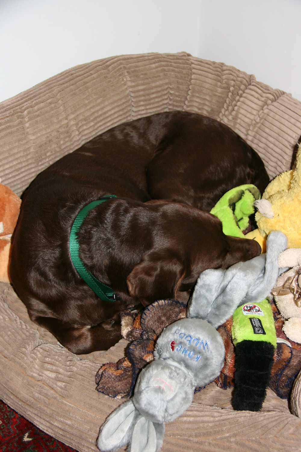 brown dog in bed with plush toys