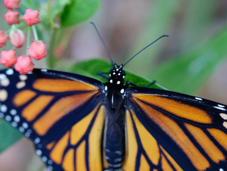 Butterflies and Bobbi