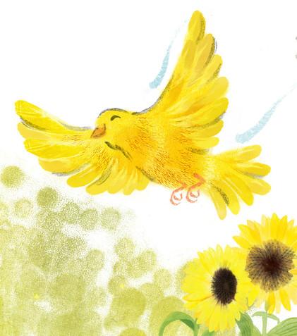 Canary - Bayard