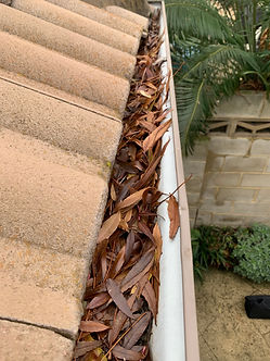 gutter cleaning dianella, gutter cleaners dianella, gutter cleaning service dianella, gutter cleaning company dianella, local gutter cleaning dianella, gutter vacuum cleaning dianella, gutter vacuum dianella, gutter vacuum, gutter vacuum cleaning, gutter cleaners, gutter cleaning perth, Gutter guards, gutter and roof repairs, gutter cleaning dianella, gutter cleaners dianella, gutter cleaning service dianella, gutter cleaning company dianella, local gutter cleaning dianella, gutter vacuum cleaning dianella, gutter vacuum dianella, gutter vacuum, gutter vacuum cleaning, gutter cleaners, gutter cleaning perth, Gutter guards, gutter and roof repairs, gutter cleaning dianella, gutter cleaners dianella, gutter cleaning service dianella, gutter cleaning company dianella, local gutter cleaning dianella, gutter vacuum cleaning dianella, gutter vacuum dianella, gutter vacuum, gutter vacuum cleaning, gutter cleaners, gutter cleaning perth, Gutter guards, gutter and roof repairs, gutter cleaning