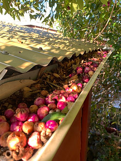 Blocked gutters perth, gutter cleaning company perth, gutter services in perth, gutter cleaning dianella, gutter cleaners dianella, gutter vacuum dianella, gutter cleaners, unblock gutters dianella, gutters, cleaning, gutter repairs, gutter cleaners dianella, gutter cleaning company, gutter cleaning services dianella, gutter cleaners dianella, gutter guards dianella, Blocked gutters perth, gutter cleaning company perth, gutter services in perth, gutter cleaning dianella, gutter cleaners dianella, gutter vacuum dianella, gutter cleaners, unblock gutters dianella, gutters, cleaning, gutter repairs, gutter cleaners dianella, gutter cleaning company, gutter cleaning services dianella, gutter cleaners dianella, gutter guards dianella, Blocked gutters perth, gutter cleaning company perth, gutter services in perth, gutter cleaning dianella, gutter cleaners dianella, gutter vacuum dianella, gutter cleaners, unblock gutters dianella, gutters, cleaning, gutter repairs, gutter cleaners dianella