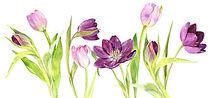 purple tulips in a row.jpg