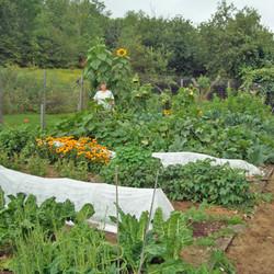 Garden in the June