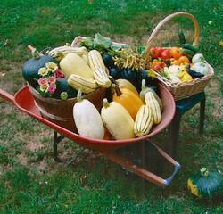 Harvest_edited.jpg
