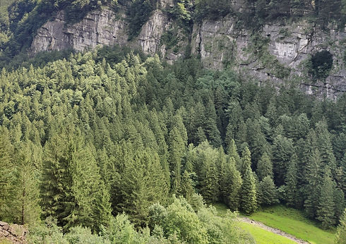 bosque_con_nombre_ret.jpg