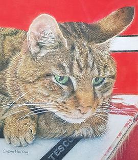 7. Tesco Cat - Fudge.jpg