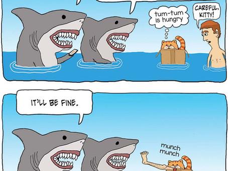 Cat shows of its shark skills