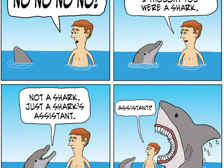 A dolphin goes to the shark side