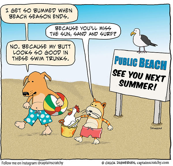 funny dog and cat leave the beach cartoon