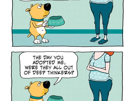 A good dog, but not a deep thinker
