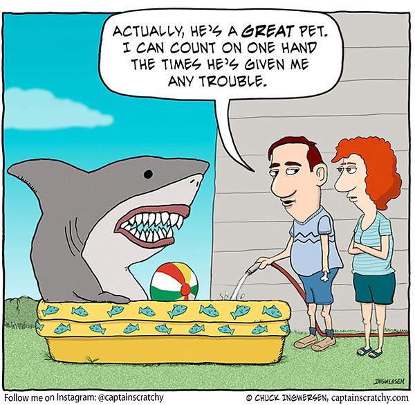funny shark in pool cartoon