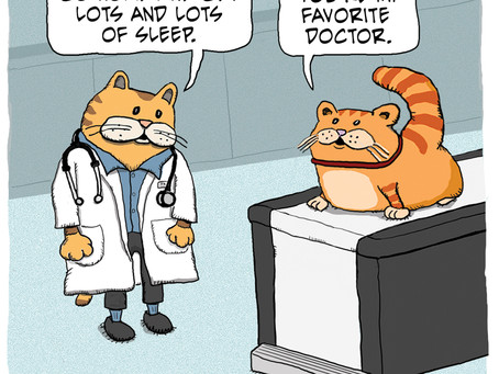 Good Cat Advice from Doctor Fuzzy Face