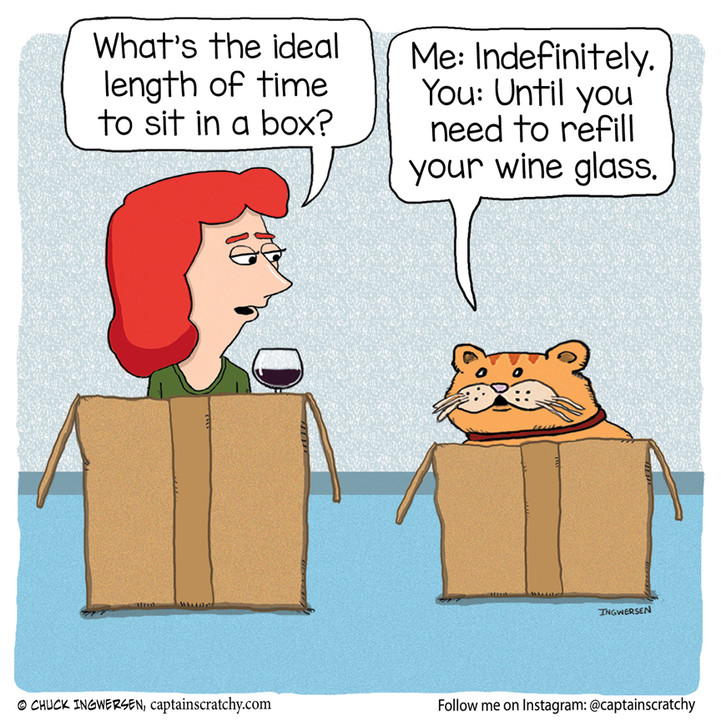 Cat in a box gives advice
