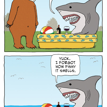 Shark goes back to the ocean