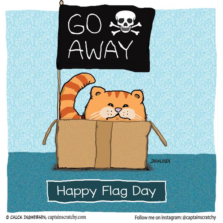 The cat celebrates Flag Day