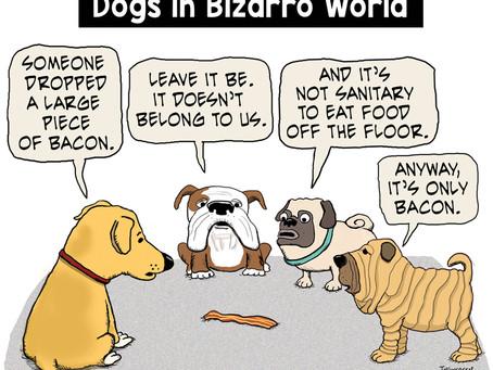 Dogs in Bizarro World ponder bacon